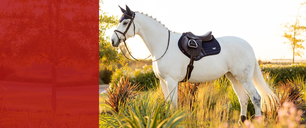 Equestrian Clearance