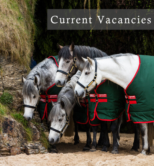 current vacancies at the Equine Warehouse