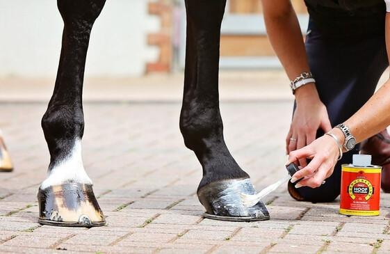 Leg & Hoof Care