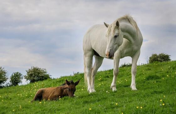 Foran Equine