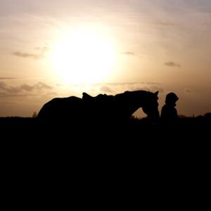 Horseware Amigo Amigo Reflectech Competition Sheet in Grey/Black