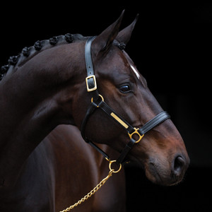Horseware Amigo Amigo Padded Headcollar in Black