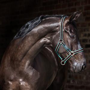 Horseware Amigo Headcollar in Black/Teal