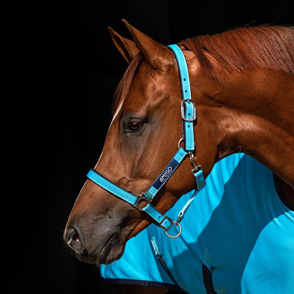 Horseware Amigo Headcollar in Delphinium Blue/Navy