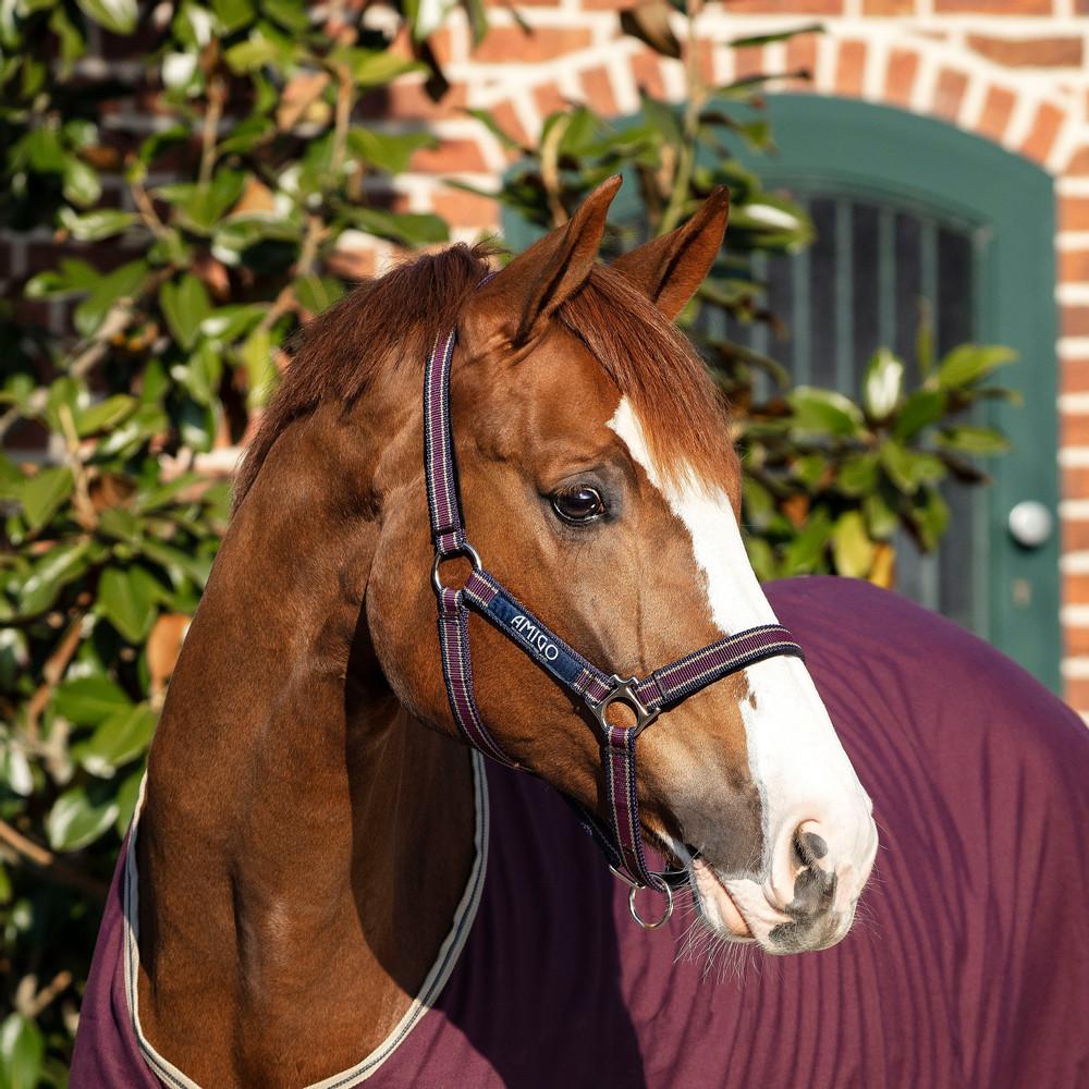 Horseware Amigo Headcollar in Fig/Navy