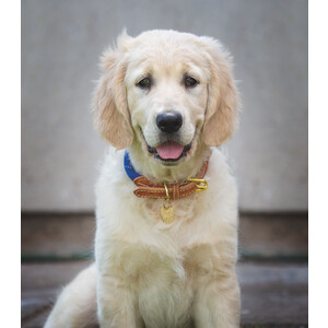 Digby & Fox Reflective Dog Collar - Blue in Blue