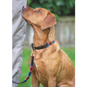 Digby & Fox Drover Polo Dog Collar - Navy/Red in Navy/Red