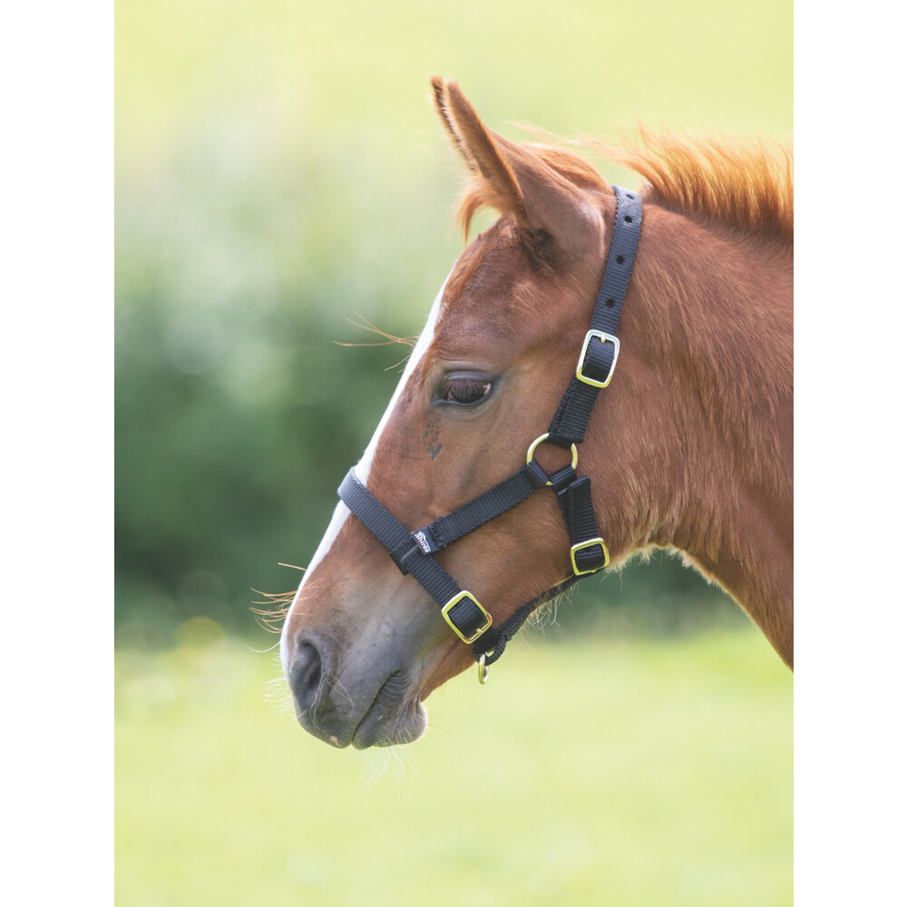 Shires Foal Headcollar in Black