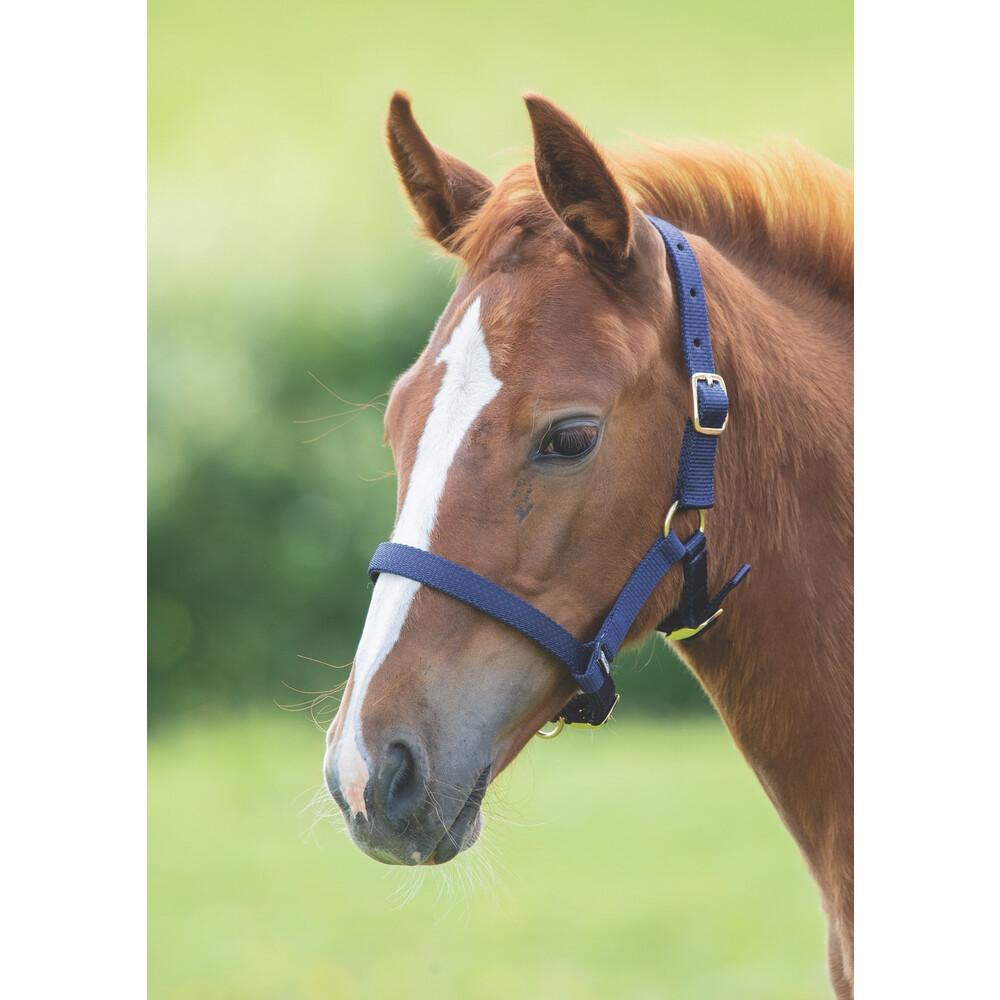 Shires Foal Headcollar in Navy