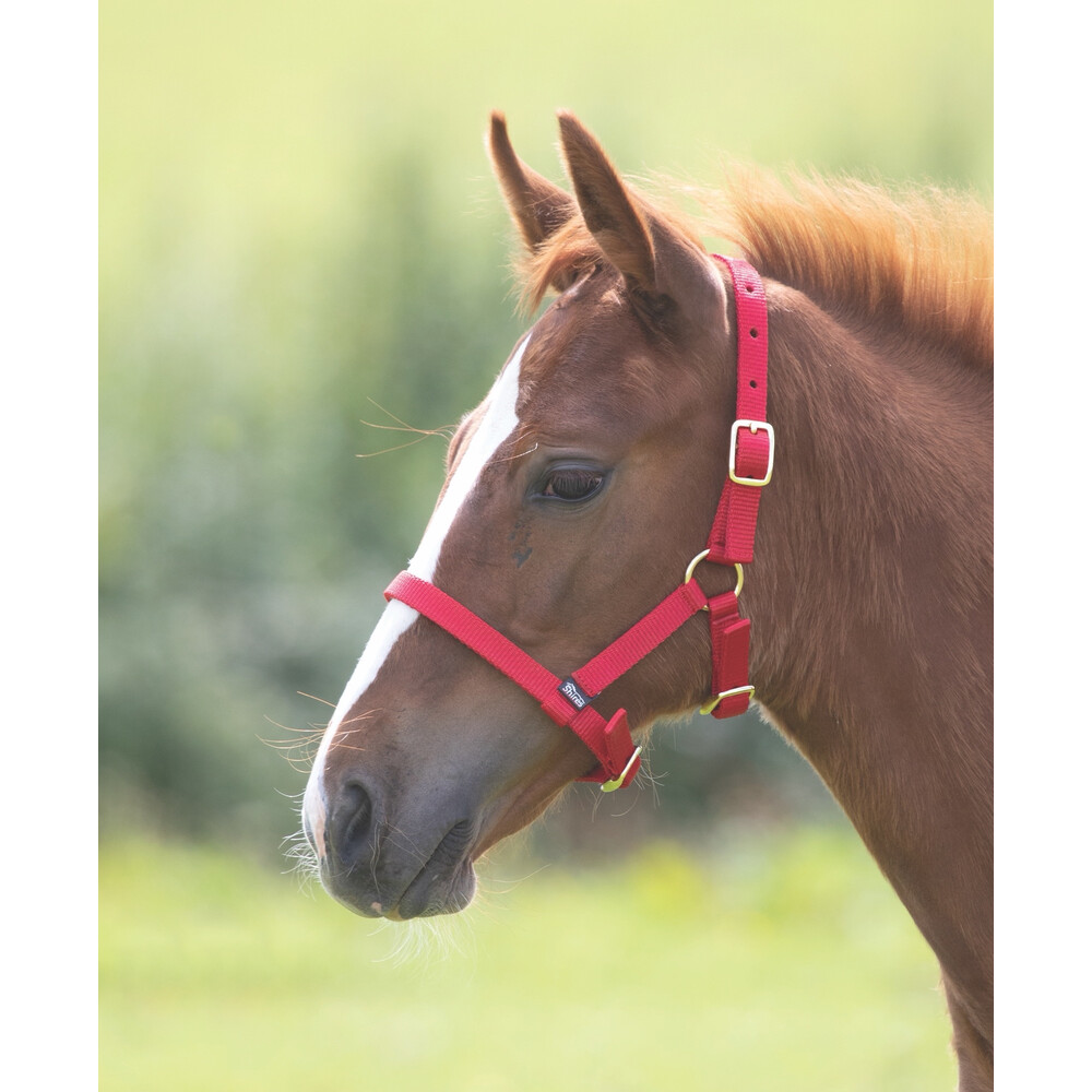 Shires Foal Headcollar in Red