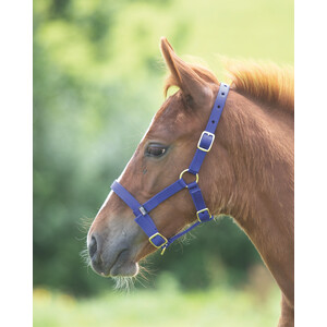Shires Foal Headcollar in Royal Blue