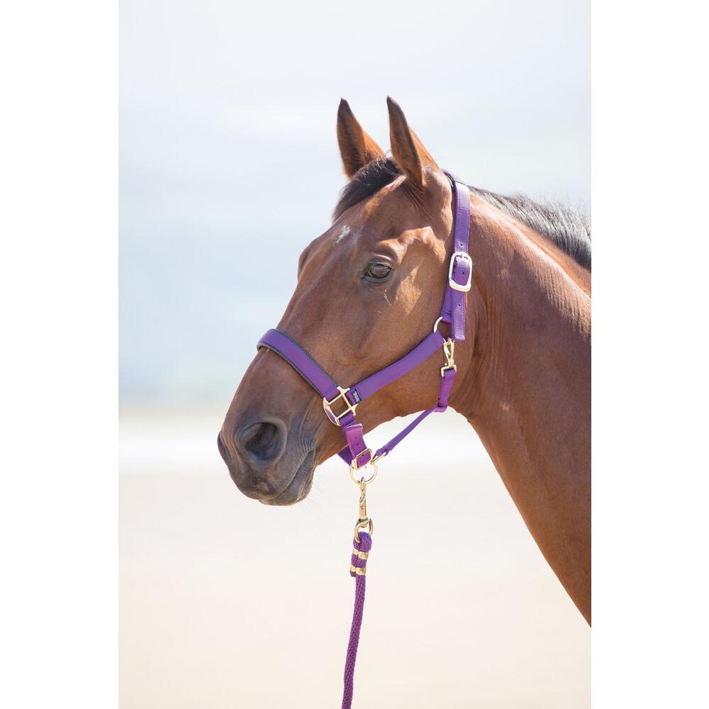 Shires Topaz Nylon Headcollar in Purple