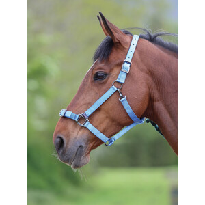 Shires Pro Adjustable Headcollar in Blue