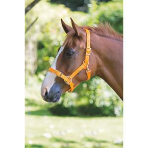 Shires Pro Adjustable Headcollar in Orange