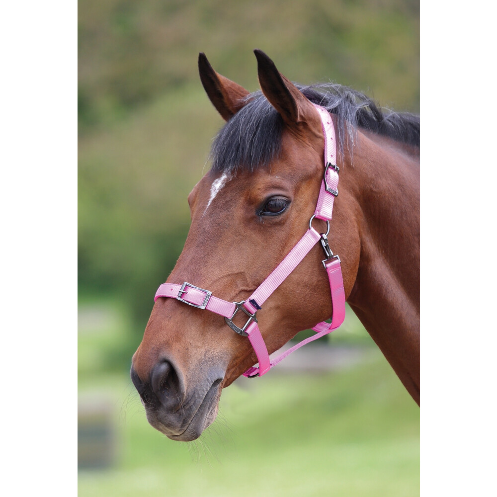 Shires Pro Adjustable Headcollar in Pink
