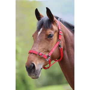 Shires Pro Adjustable Headcollar in Red