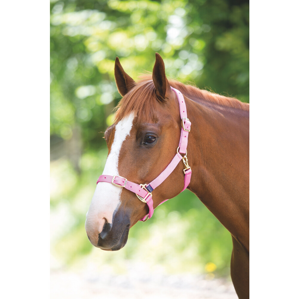 Shires Adjustable Headcollar in Pink