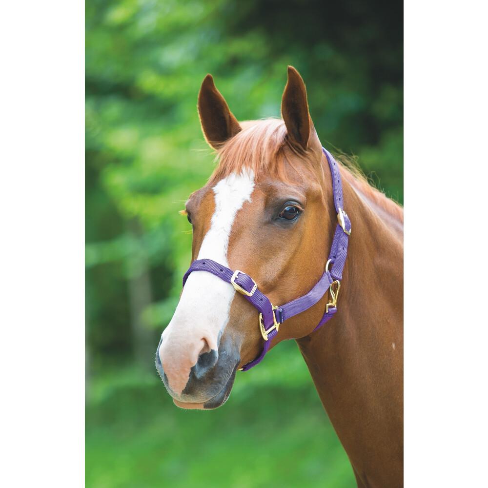 Shires Adjustable Headcollar in Purple
