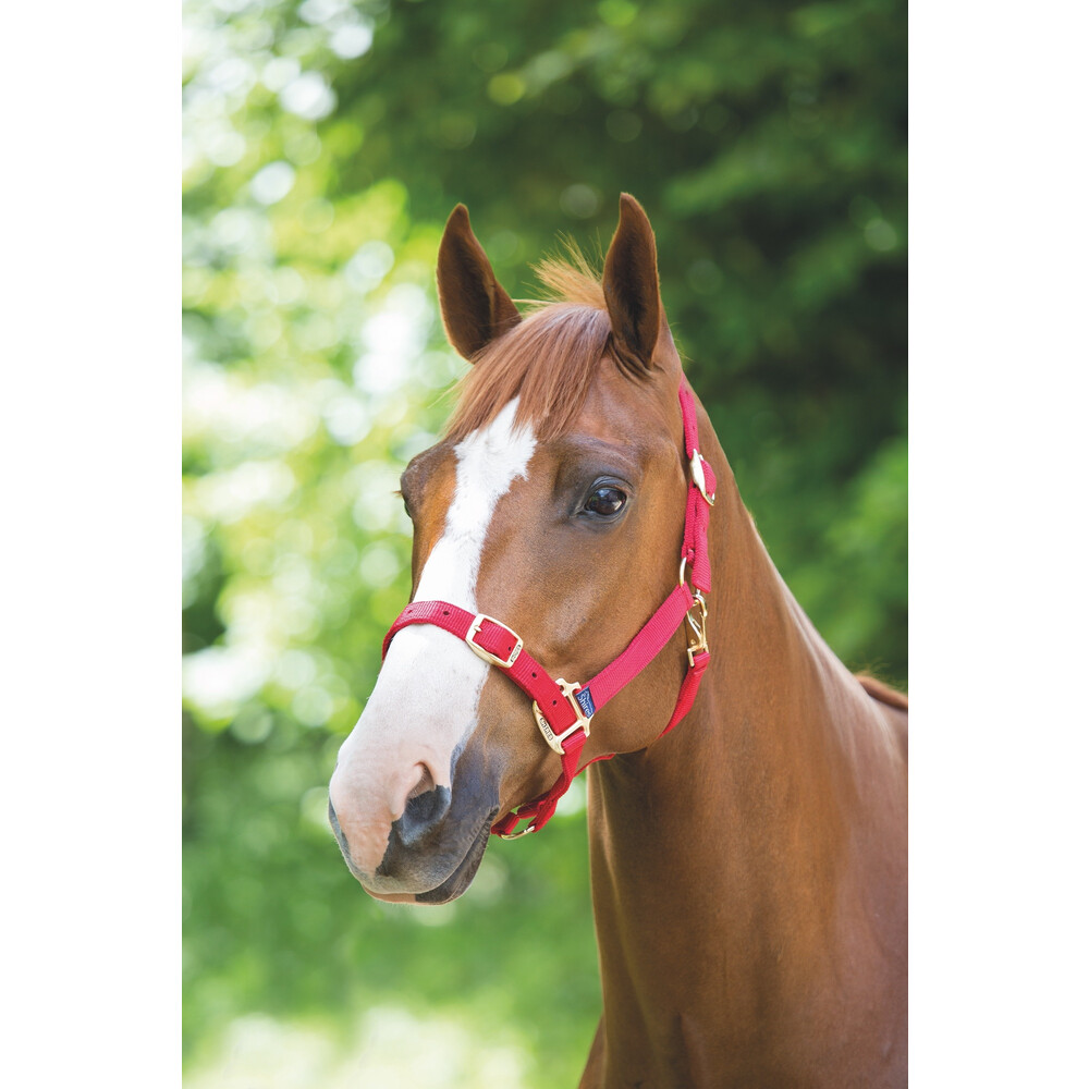 Shires Adjustable Headcollar in Red