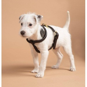 Digby & Fox Rolled Leather Dog Harness - Black in Black