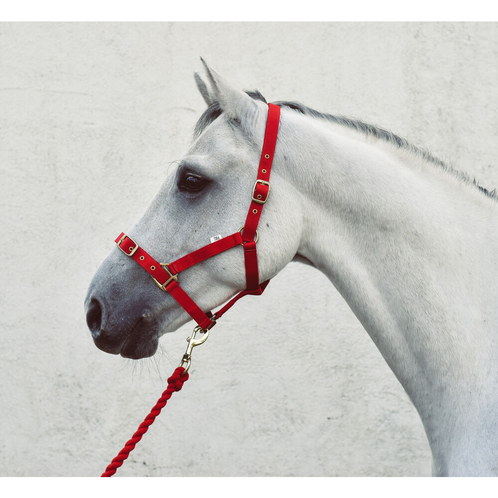 Equisential Economy Headcollar & Leadrope Set in Red