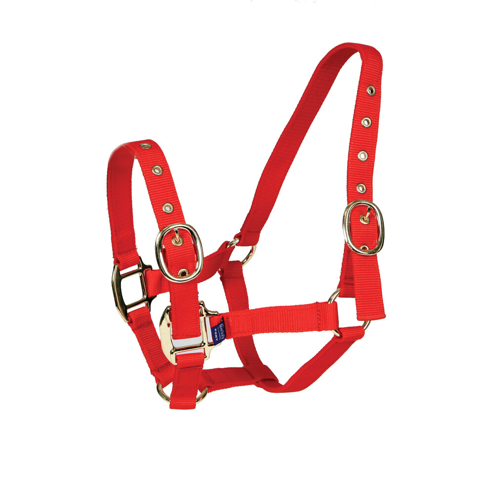 Equisential Economy Webbing Headcollar in Red