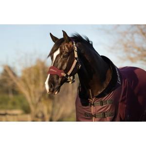 LeMieux Vogue Fleece Headcollar & Rope - Rioja in Rioja
