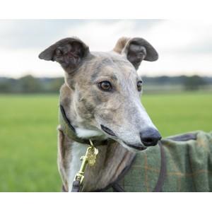 Digby & Fox Tweed Greyhound Collar - Red/Yellow/Blue Check in Red/Yellow/Blue Check